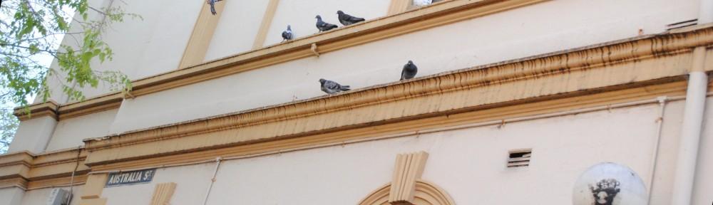 Pigeons on Australia Street